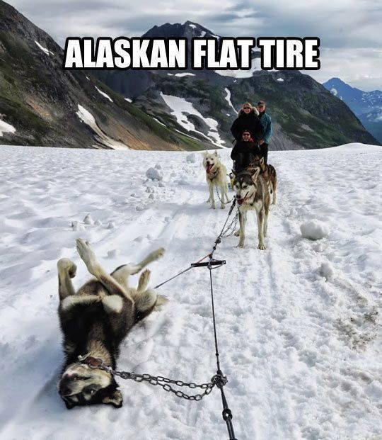 Alaskan Flat Tyre