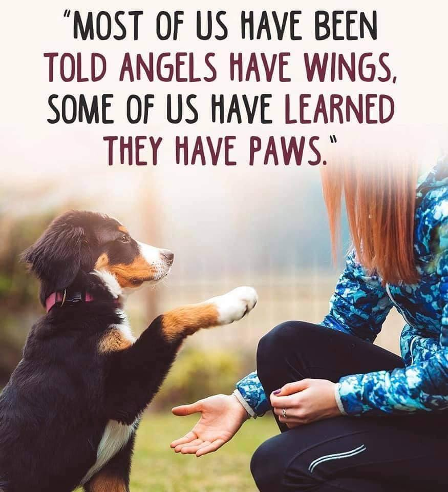 Angels Have Paws