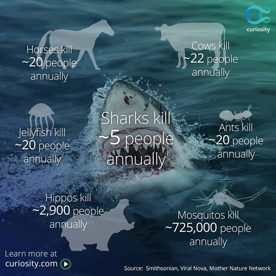 Annual Deaths From Sharks