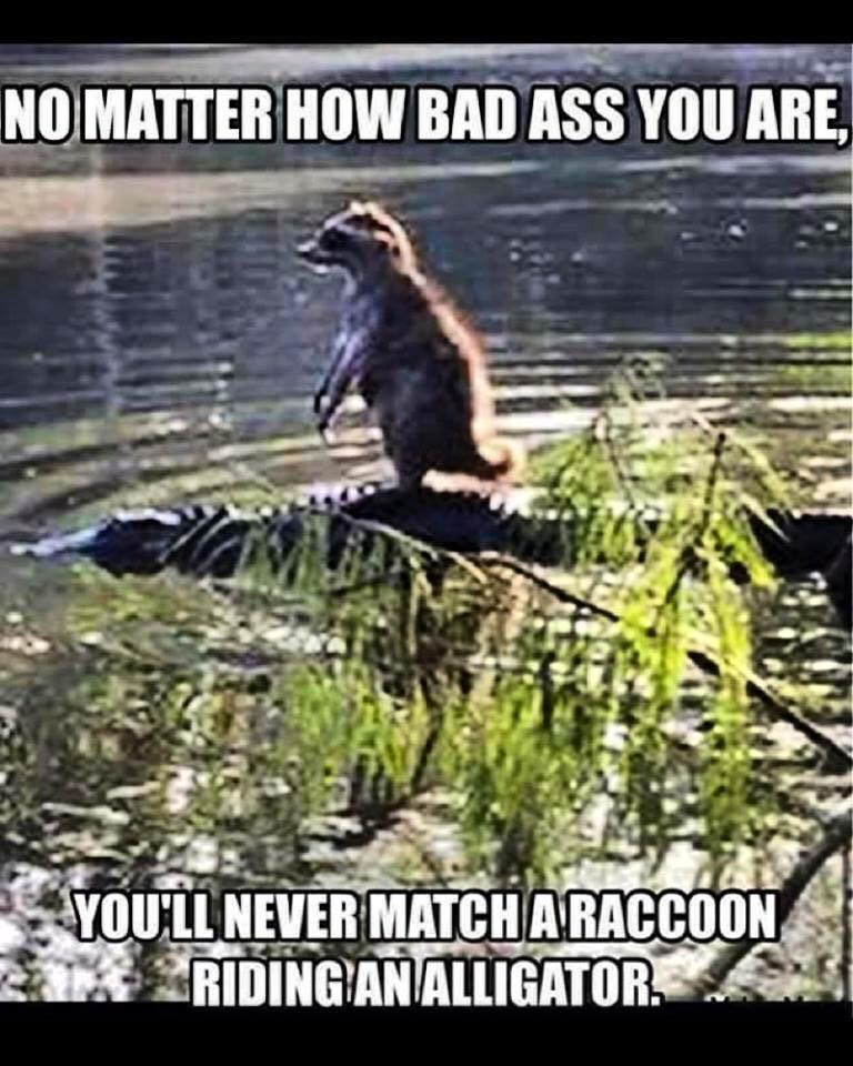 Bad Ass Raccoon