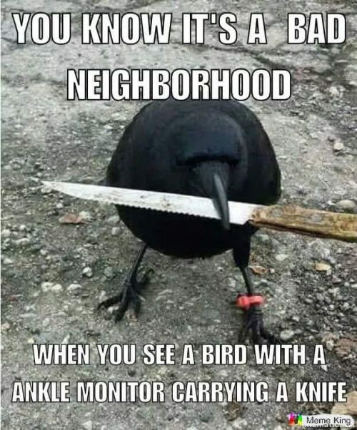 Bad Neighbourhood