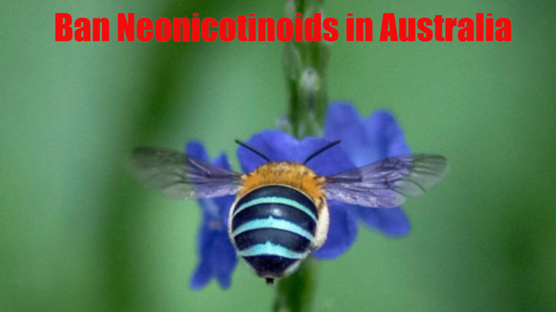 Ban Neonicotinoids in Australia