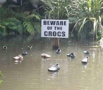 Beware The Crocs