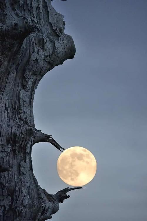 Brilliant Moon Shot