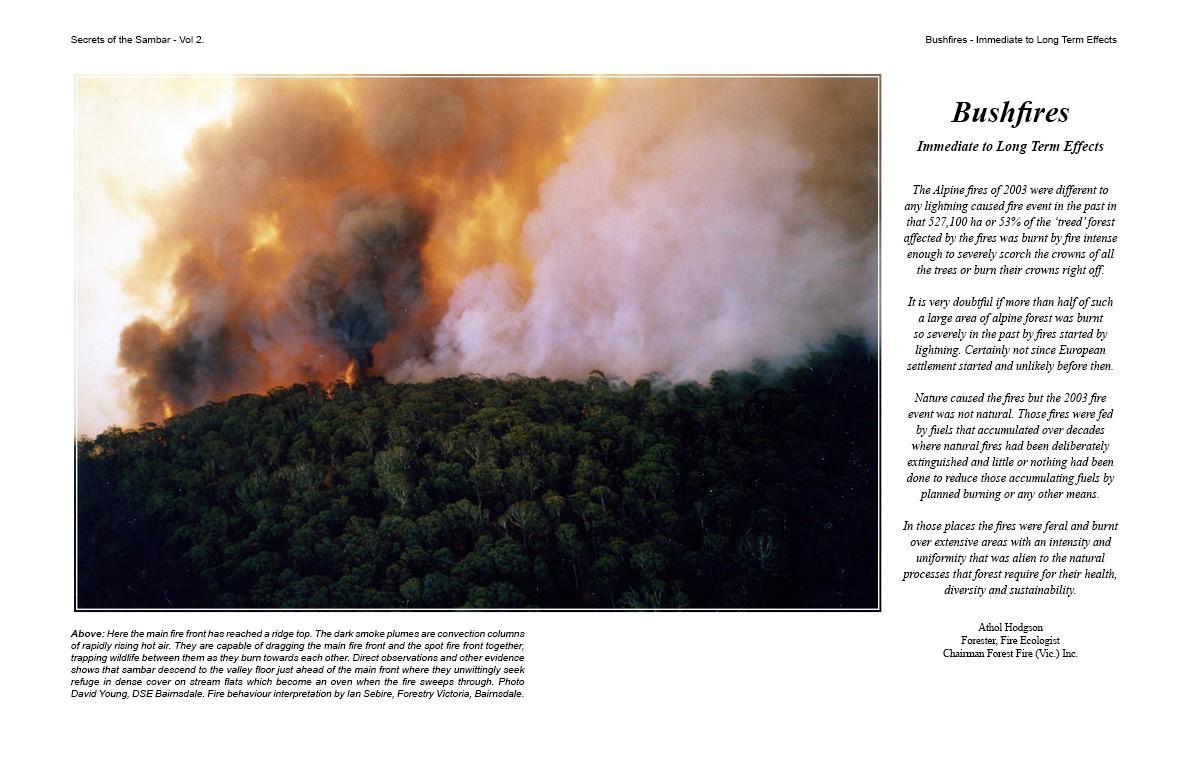 Bushfire Image From Secrets of the Sambar