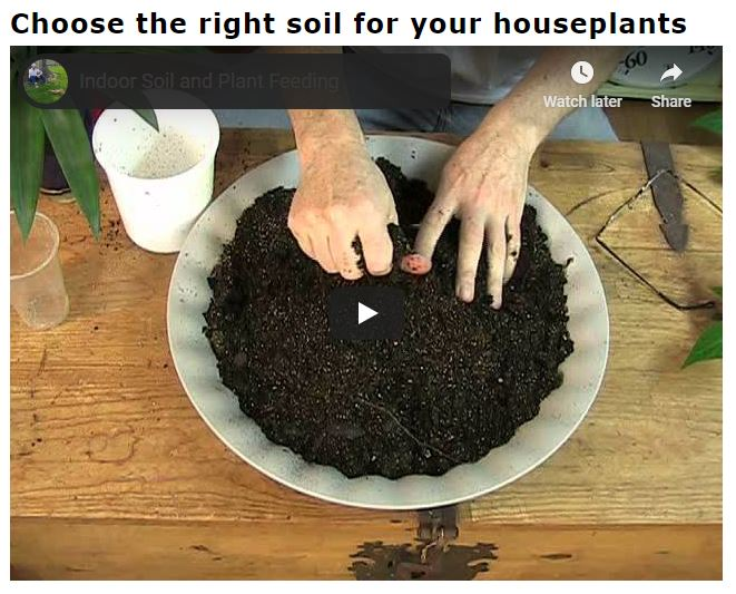 Choose The Right Soil for Your House Plants
