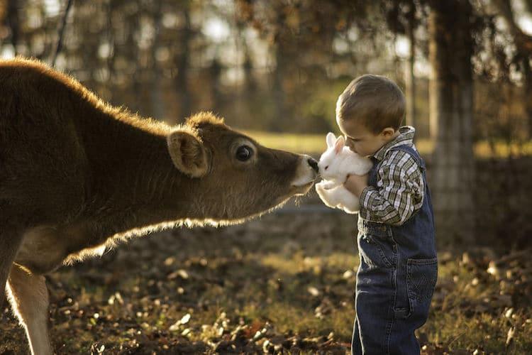Cow Bunny Boy
