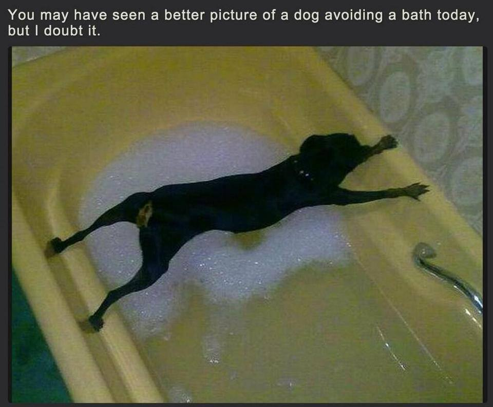 Dog Avoids Bath