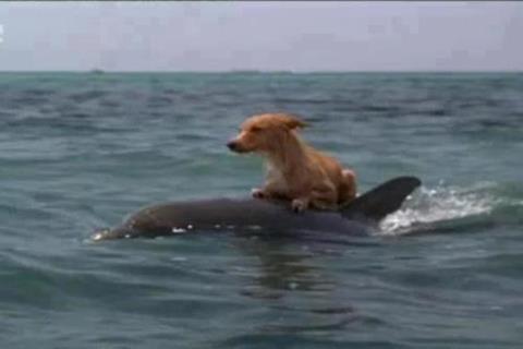 Dog On Dolphin