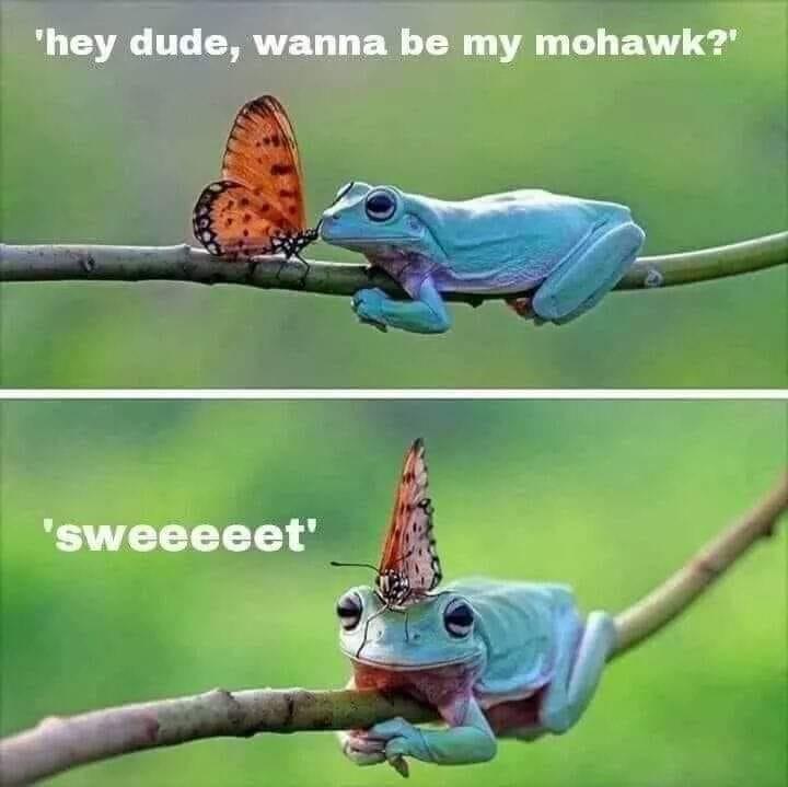 Frog Mohawk