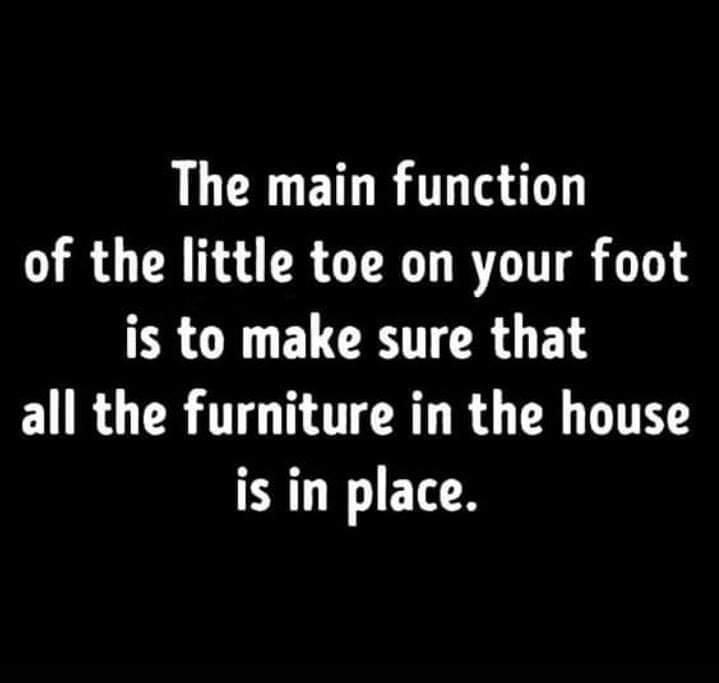 Furniture Feelers