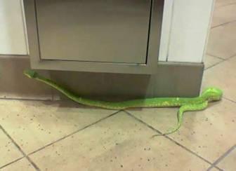Garden Snakes