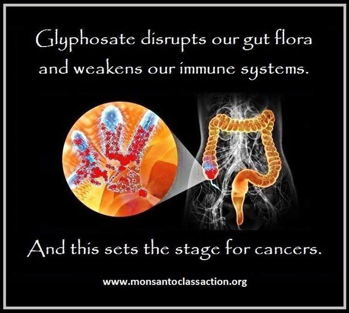 Glyphosate Carcinogenic