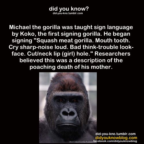 Gorilla Sign Language