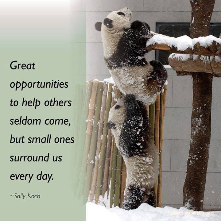 Small Opportunities To Help Surround Us