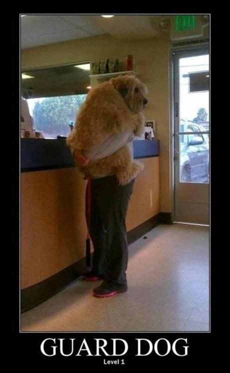 Guard Dog Level 1