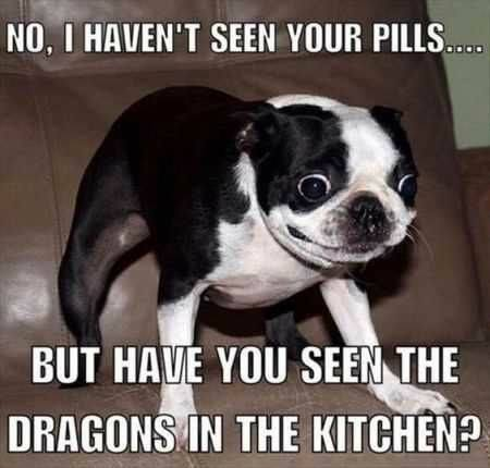 Have You Seen The Dragons In The Kitchen?