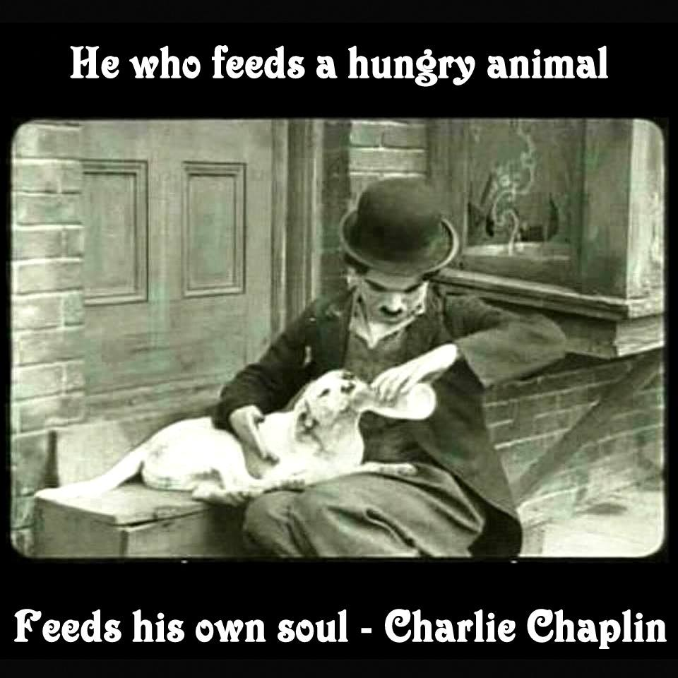 He Who Feeds A Hungry Animal Feeds His Soul