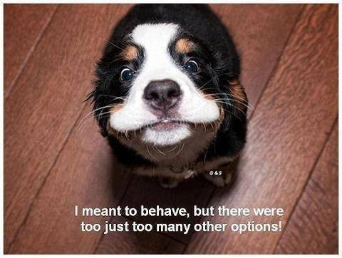 I Meant To Behave