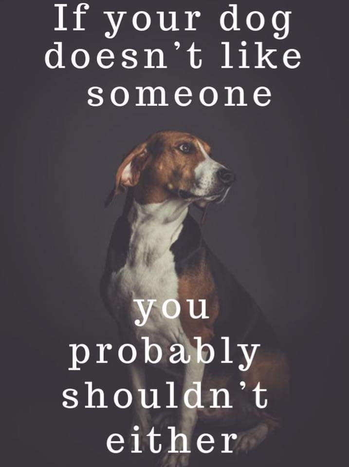 If Your Dog Does Not Like Someone