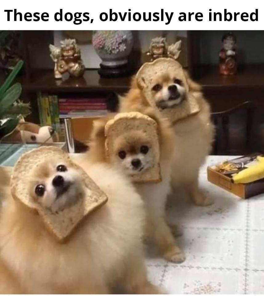 InBred Dogs
