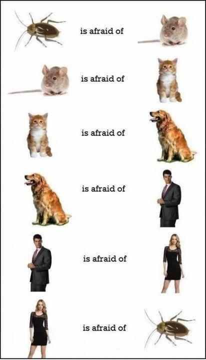 ...Is Afraid Of...