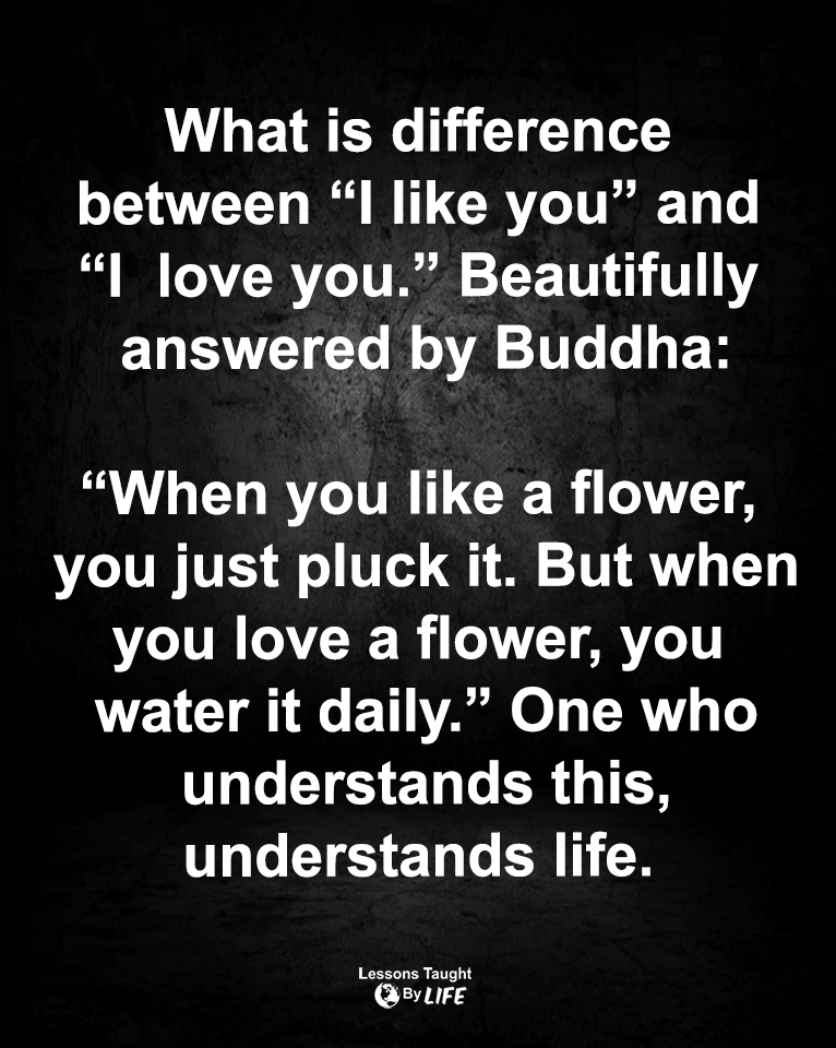 Like Versus Love