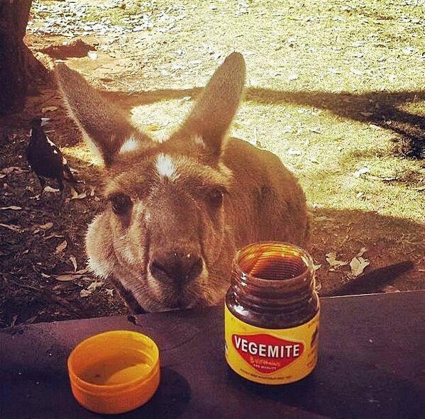 Magpie Kangaroo And Vegemite
