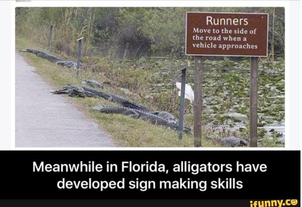 Mean While In Florida