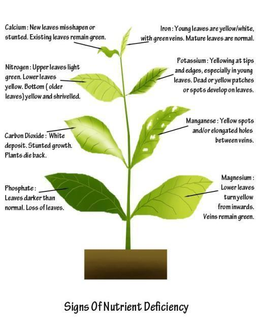 Mineral Deficiencies In Plants