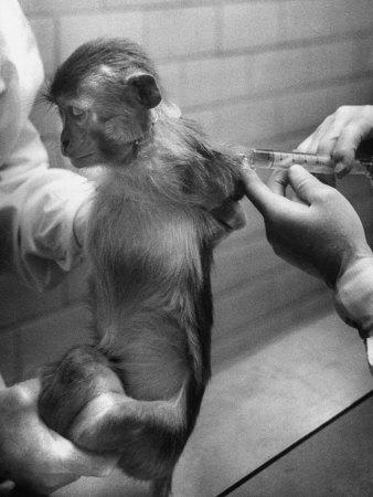 Vaccinate Monkey