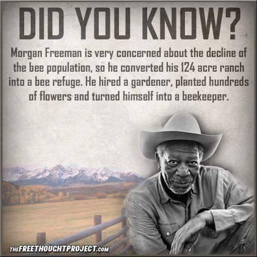 Morgan The Beekeeper