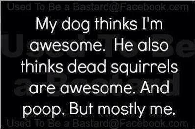 My Dog Thinks I Am Awesome