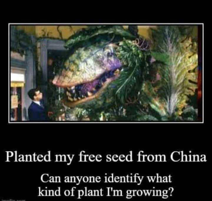 My Free Seed From China