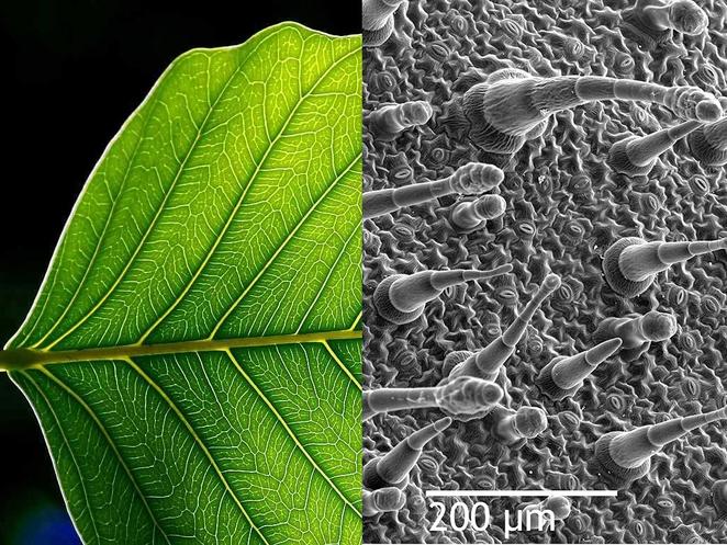Nano Tree Leaf