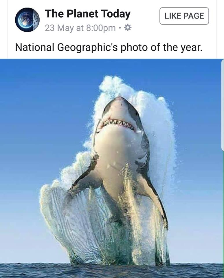 National_Geographic_Shark