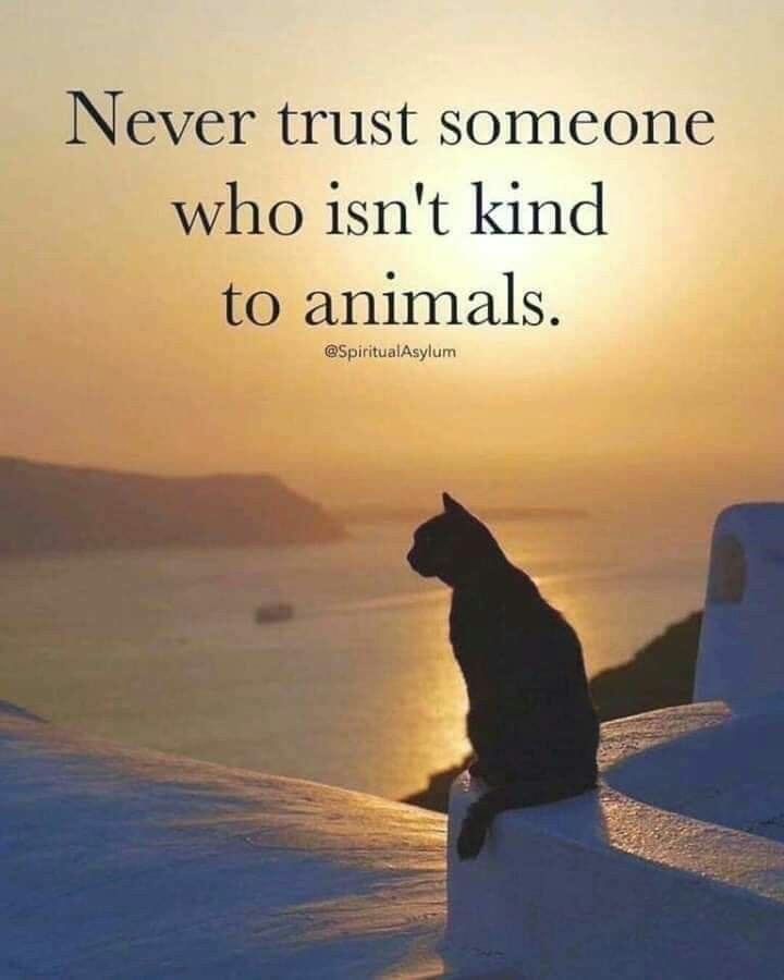 Never Trust Someone Not Kind To Animals