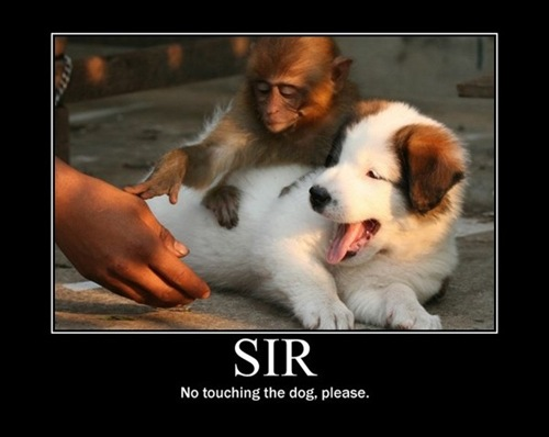 Sir. No Touching The Dog Please