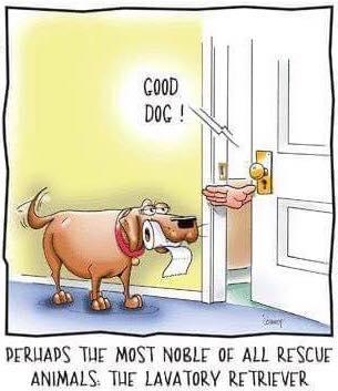 Noble Rescue Dog
