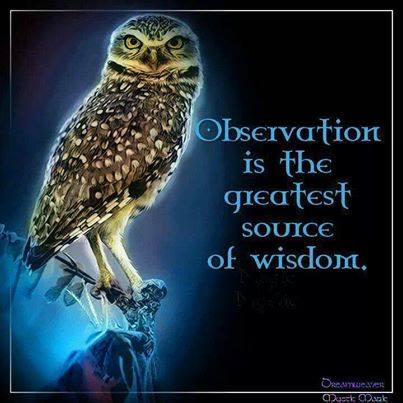 Observation Is The Greatest Source Of Wisdom