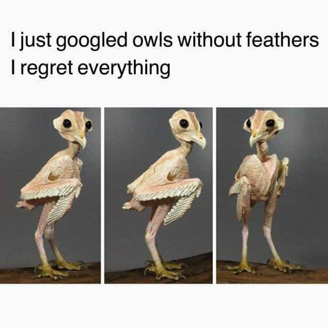 Owl Without Feathers