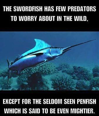 Penfish Versus Swordfish