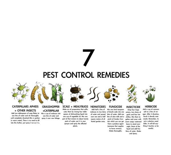 Pest Control Remedies
