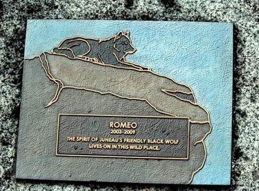 Romeo The Wolf