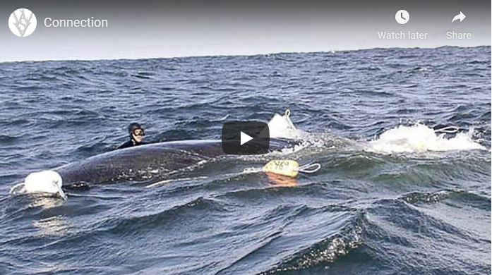 Saved Whale