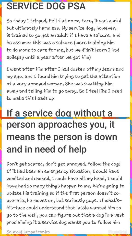 Service Dog PSA