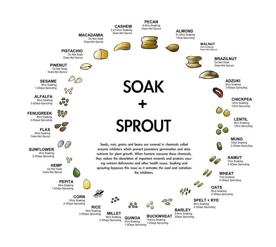 Nuts and seeds - which to soak and which can sprout