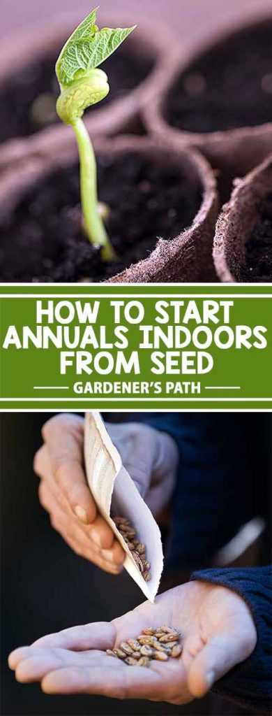 Start Annuals Indoors From Seeds