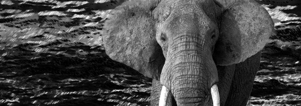 Stop Madness Elephant