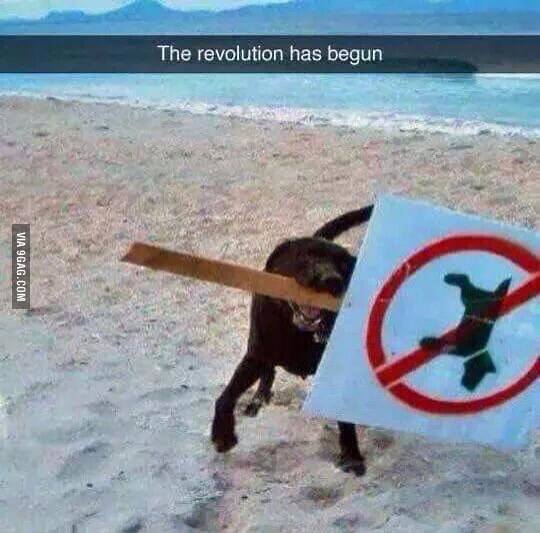 The Revolution Has Begun